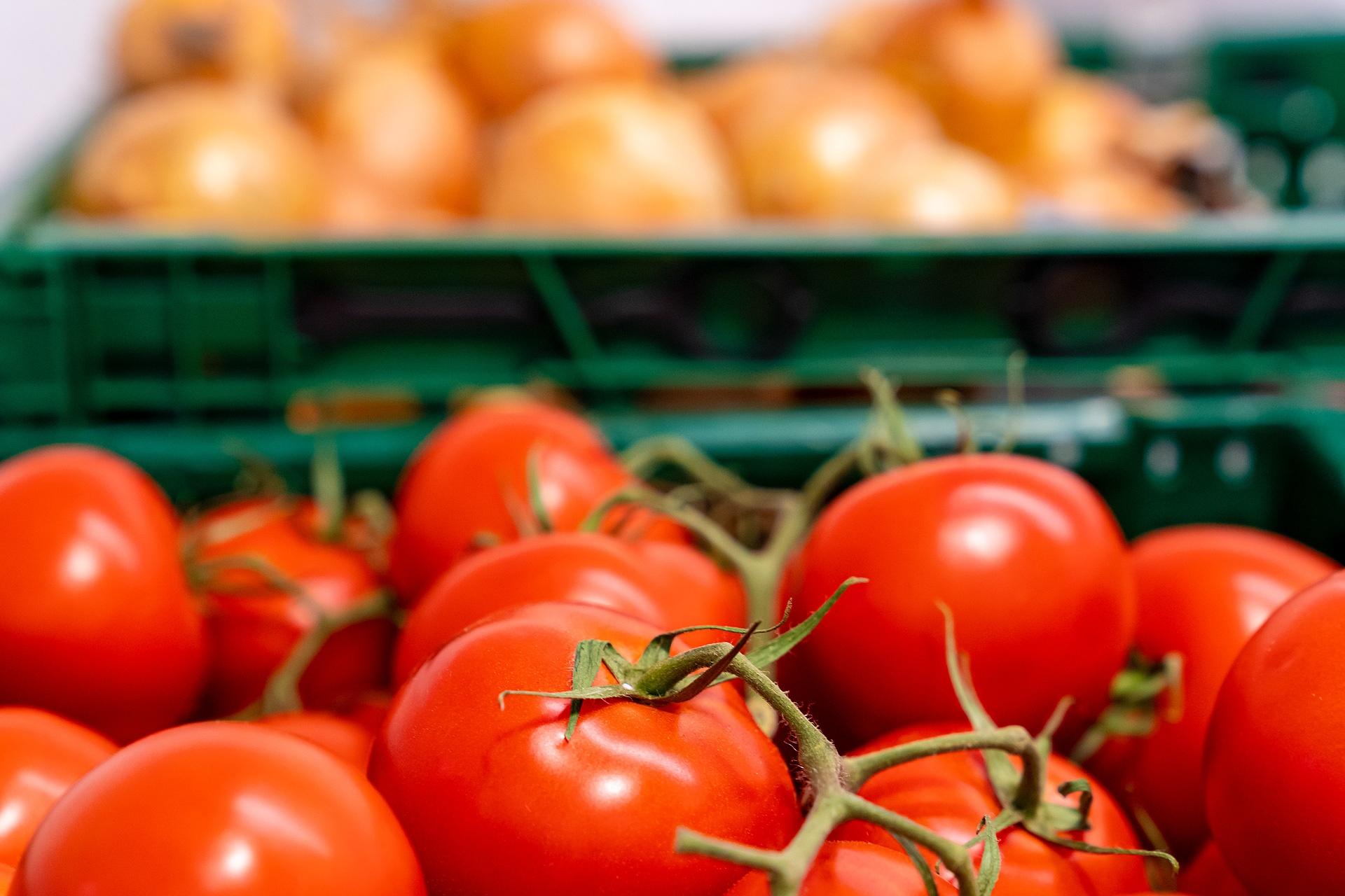 Frisches Gemüse aus der Region: Tomaten