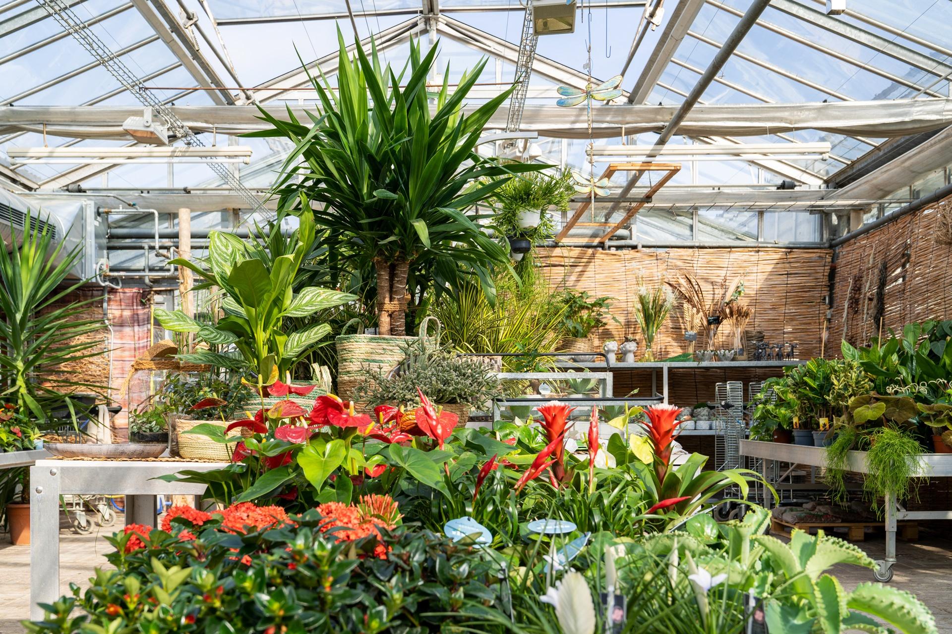 Zimmerpflanzenhaus der Gärtnerei Schunke