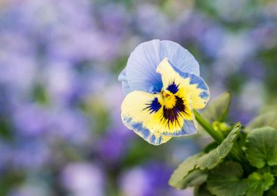 Blumen & Pflanzen von hier