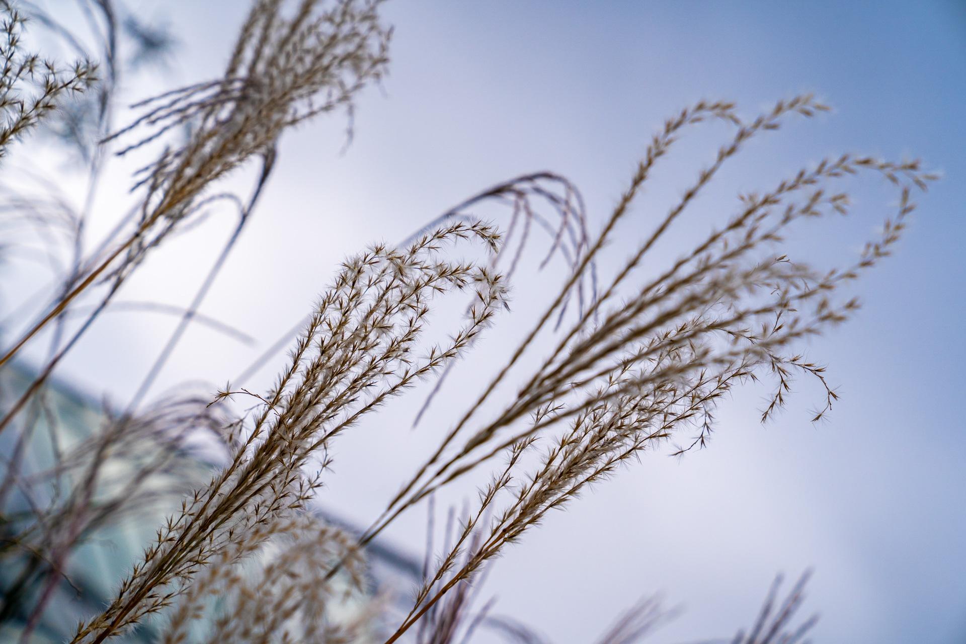 Gräser im Mustergarten
