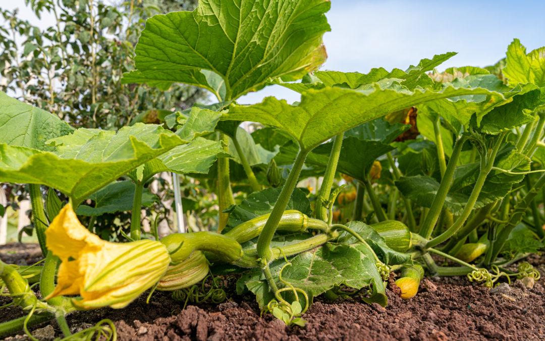 Kräuter & Gemüse aus Unterfranken