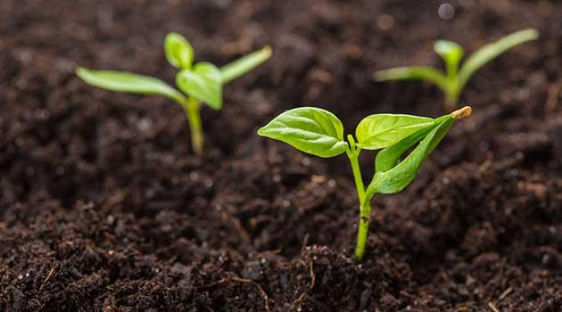 Erde Samen und Dünger von Gärtnerei Schunke