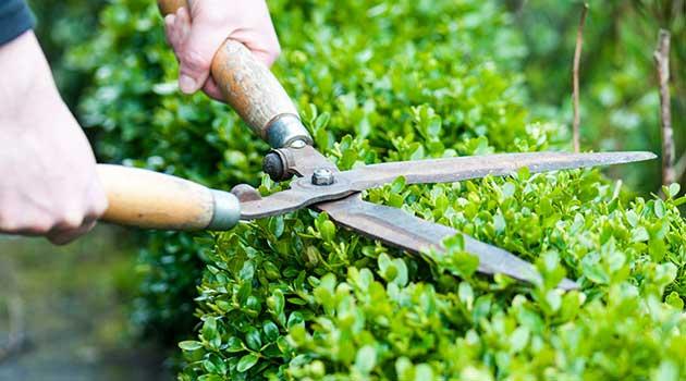 Gaertnerei Schunke Dienstleistungen Gartenpflege