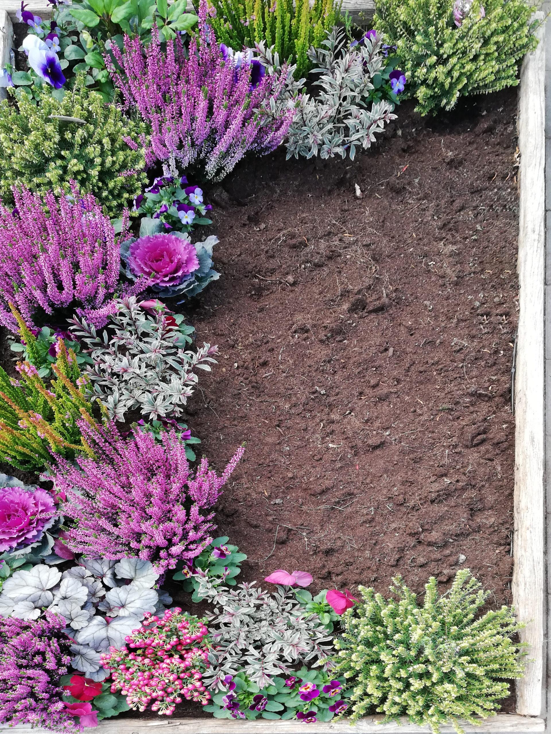 Grab bepflanzen in Pink und Grün mit Erika
