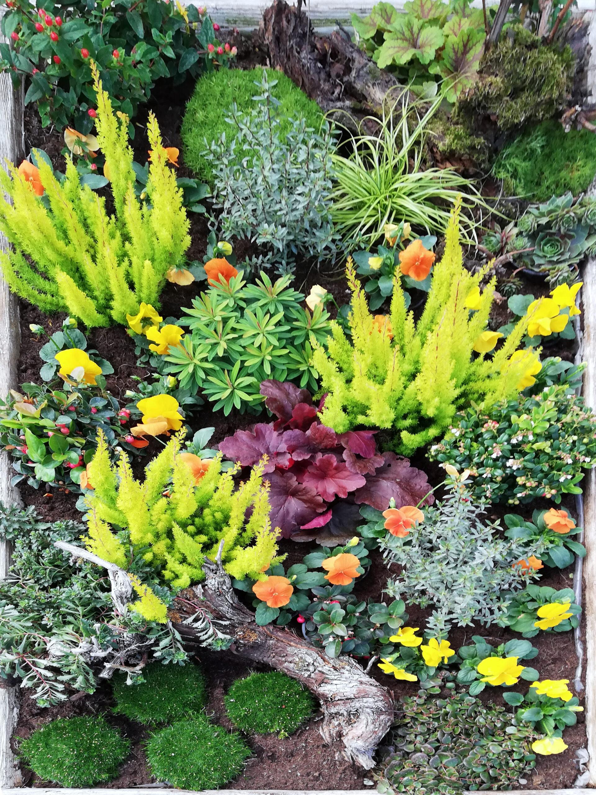 Grab Bepflanzung Gelb rot grün