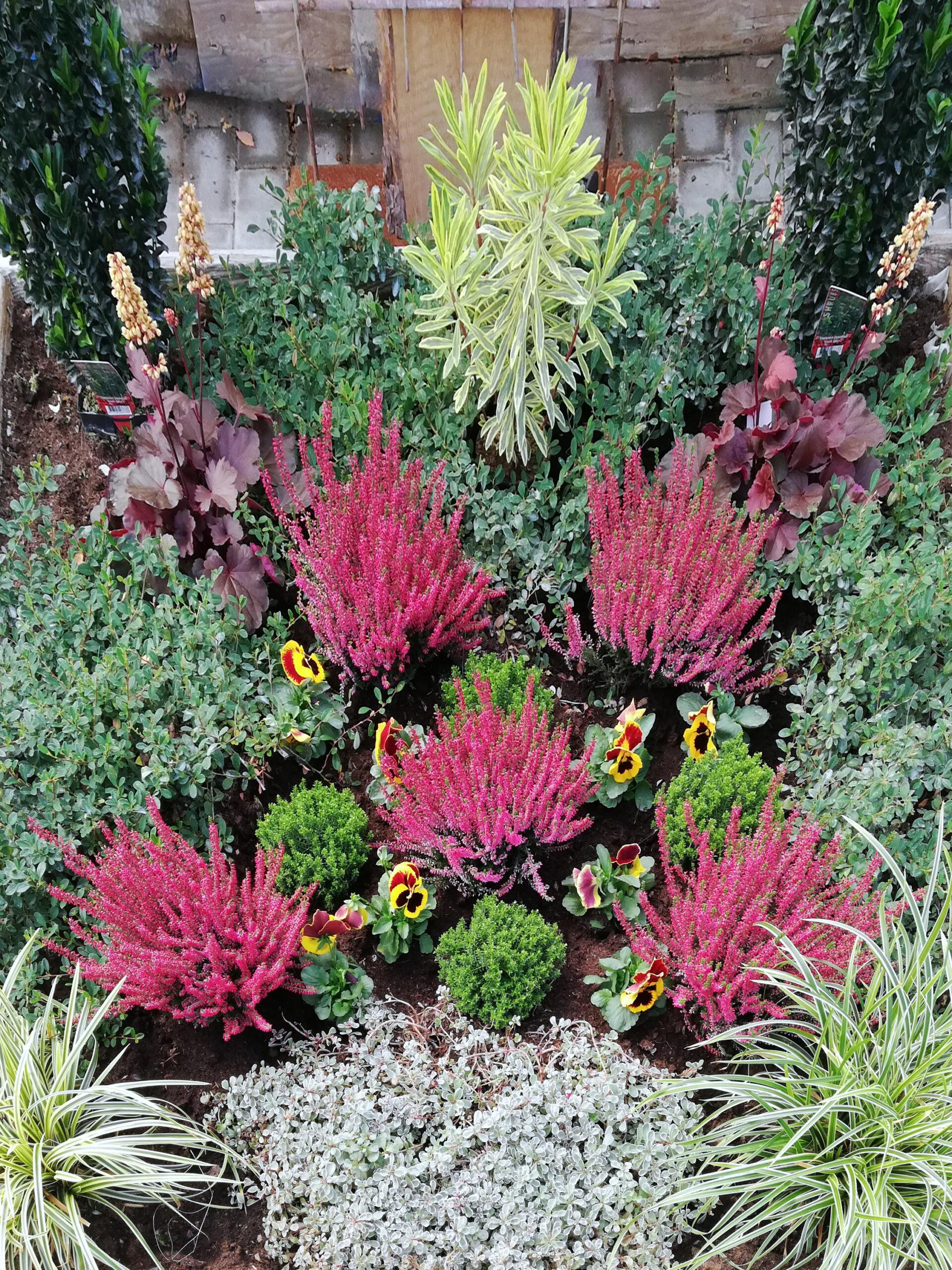 Grab Bepflanzung mit Calluna und Viola und Gräsern