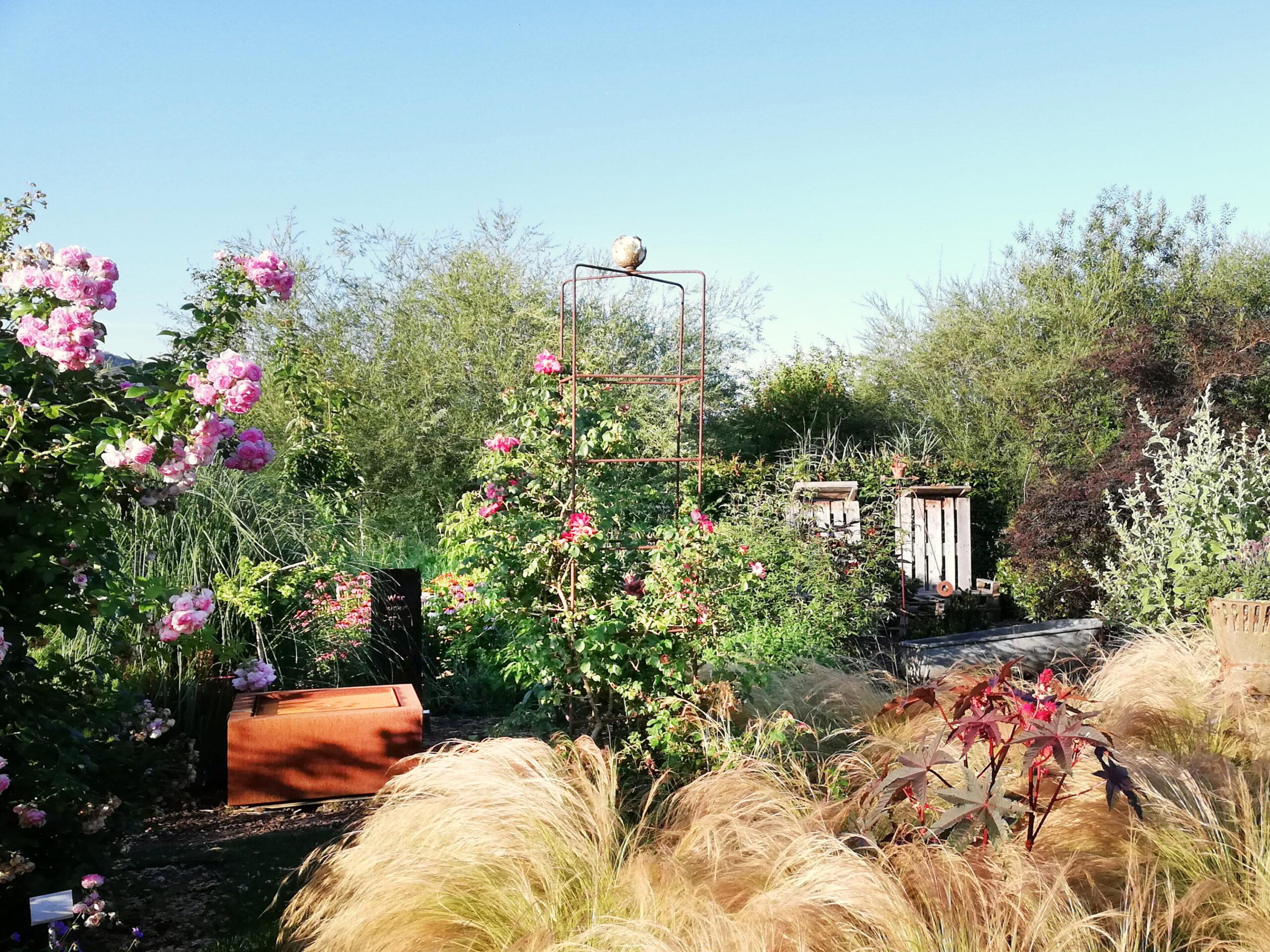 Gräser und Rosen im Garten