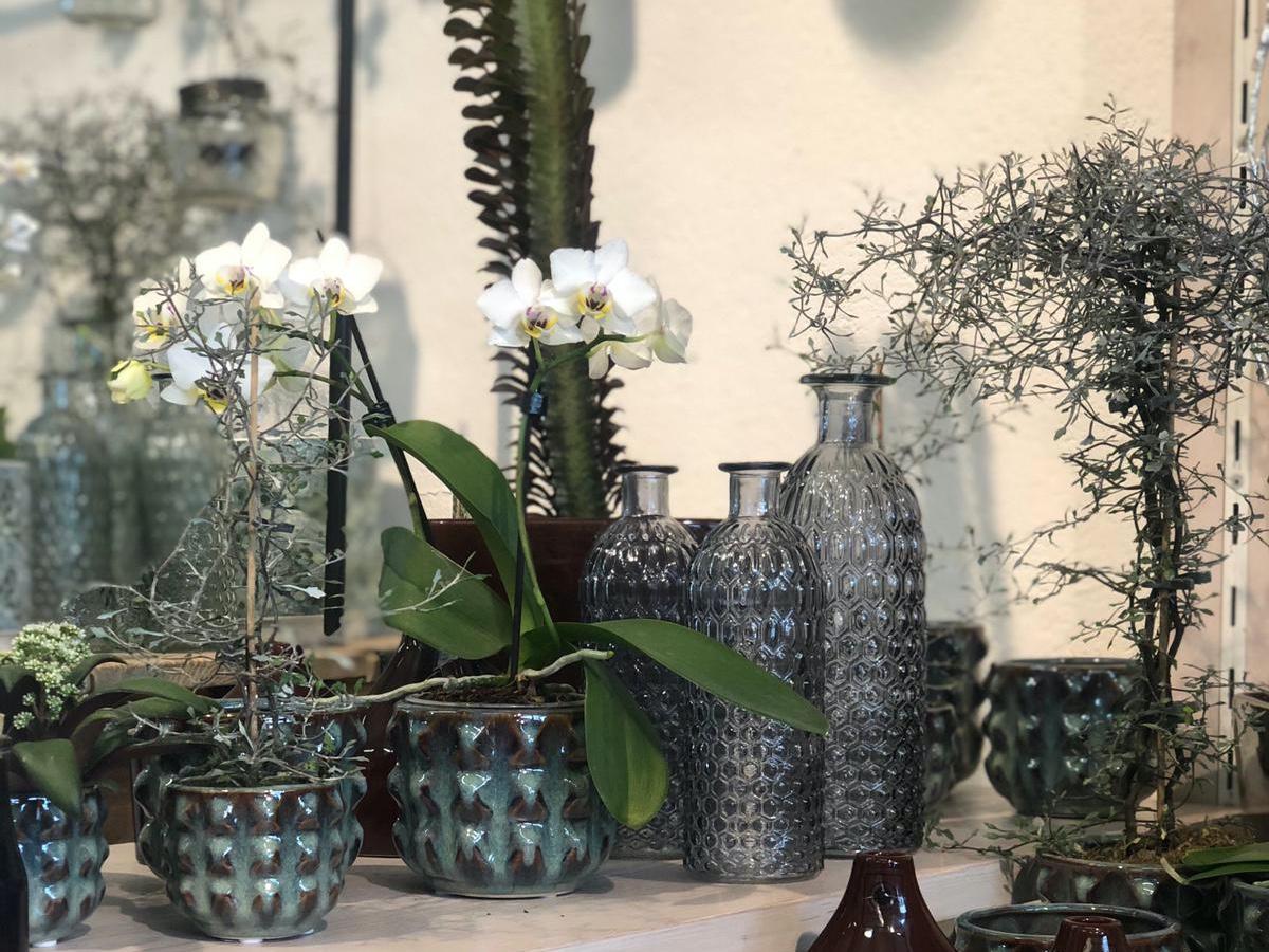 Orchideen Und Tolle Gefäße