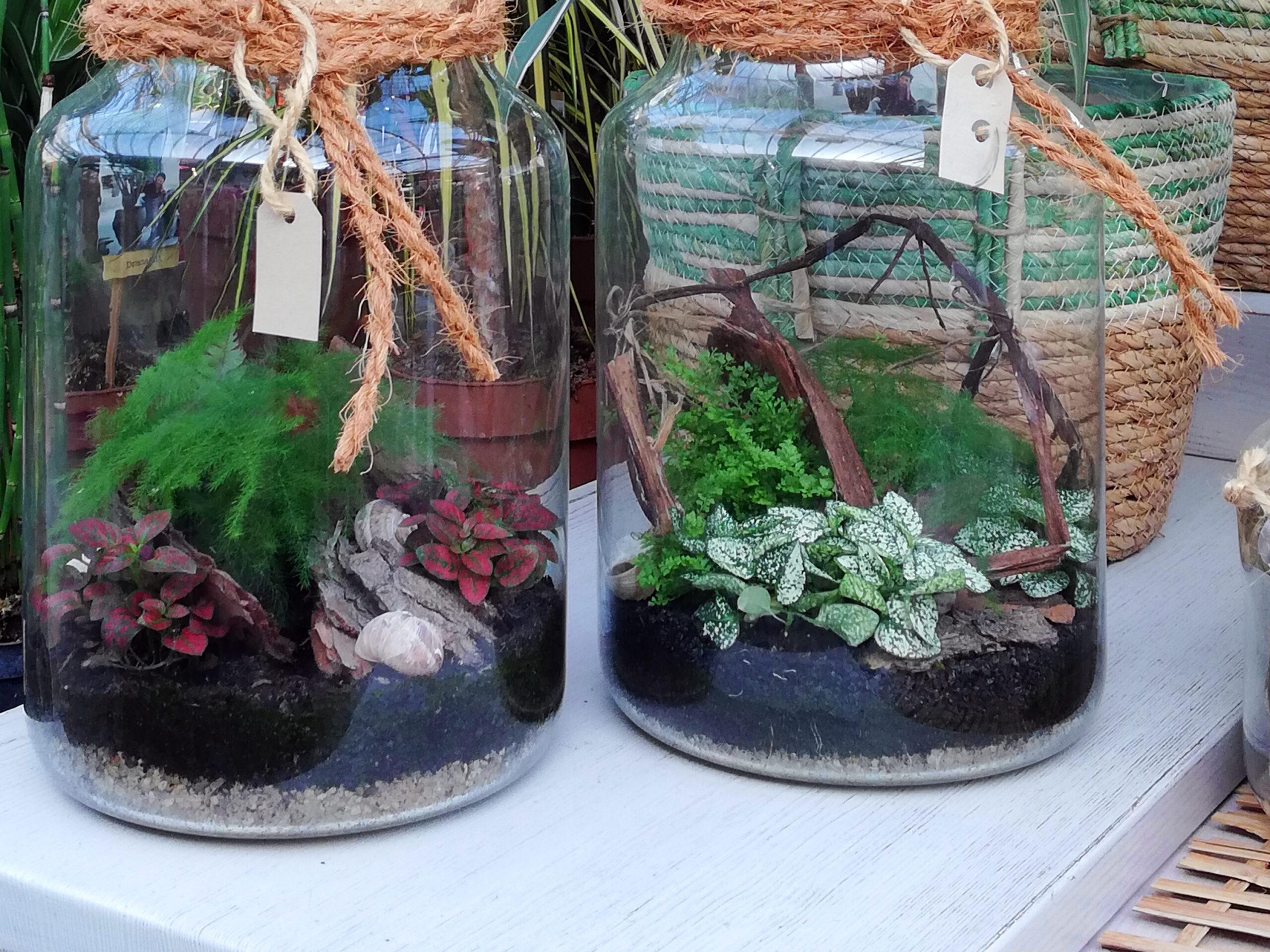 Pflanzen im Glas gepflanzt