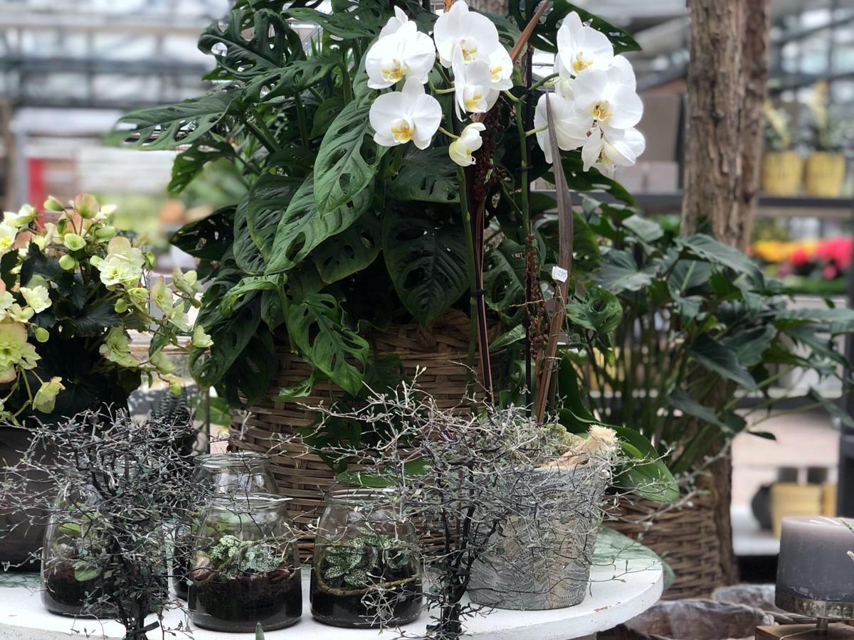 Pflanzen Im Glas Und Im Korb