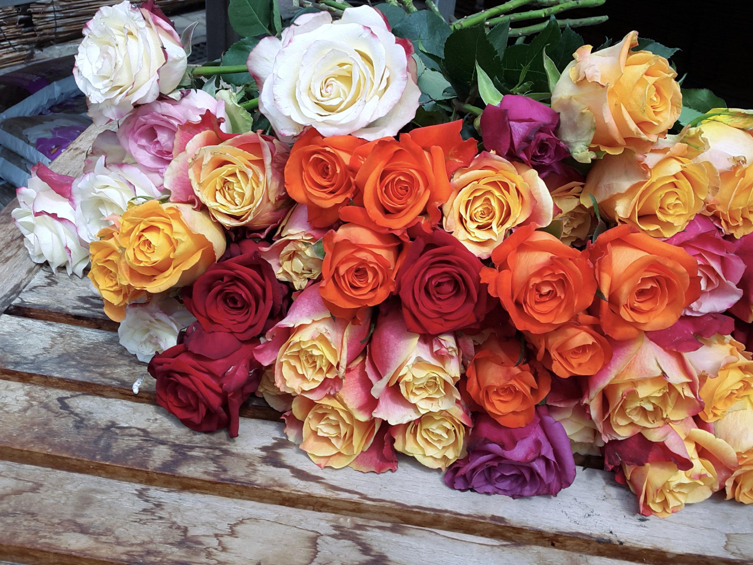 Rosen In Vielen Farben
