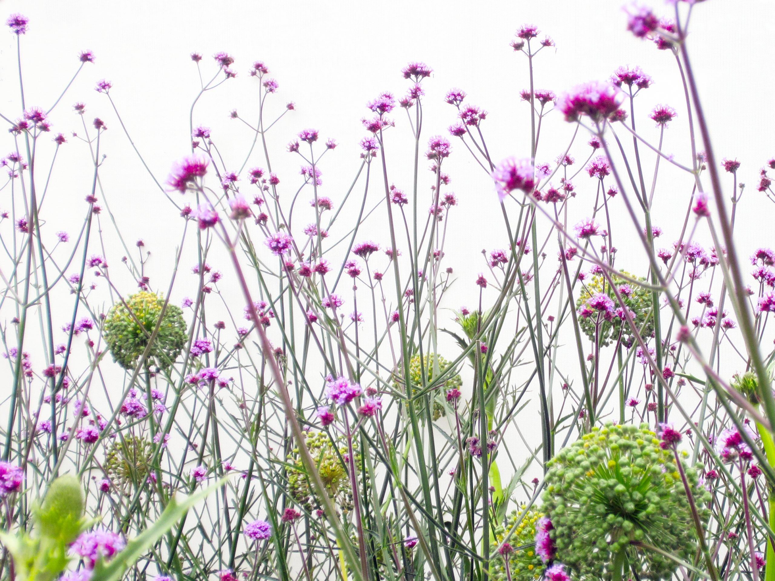 Sommerblüten Violett Und Grün