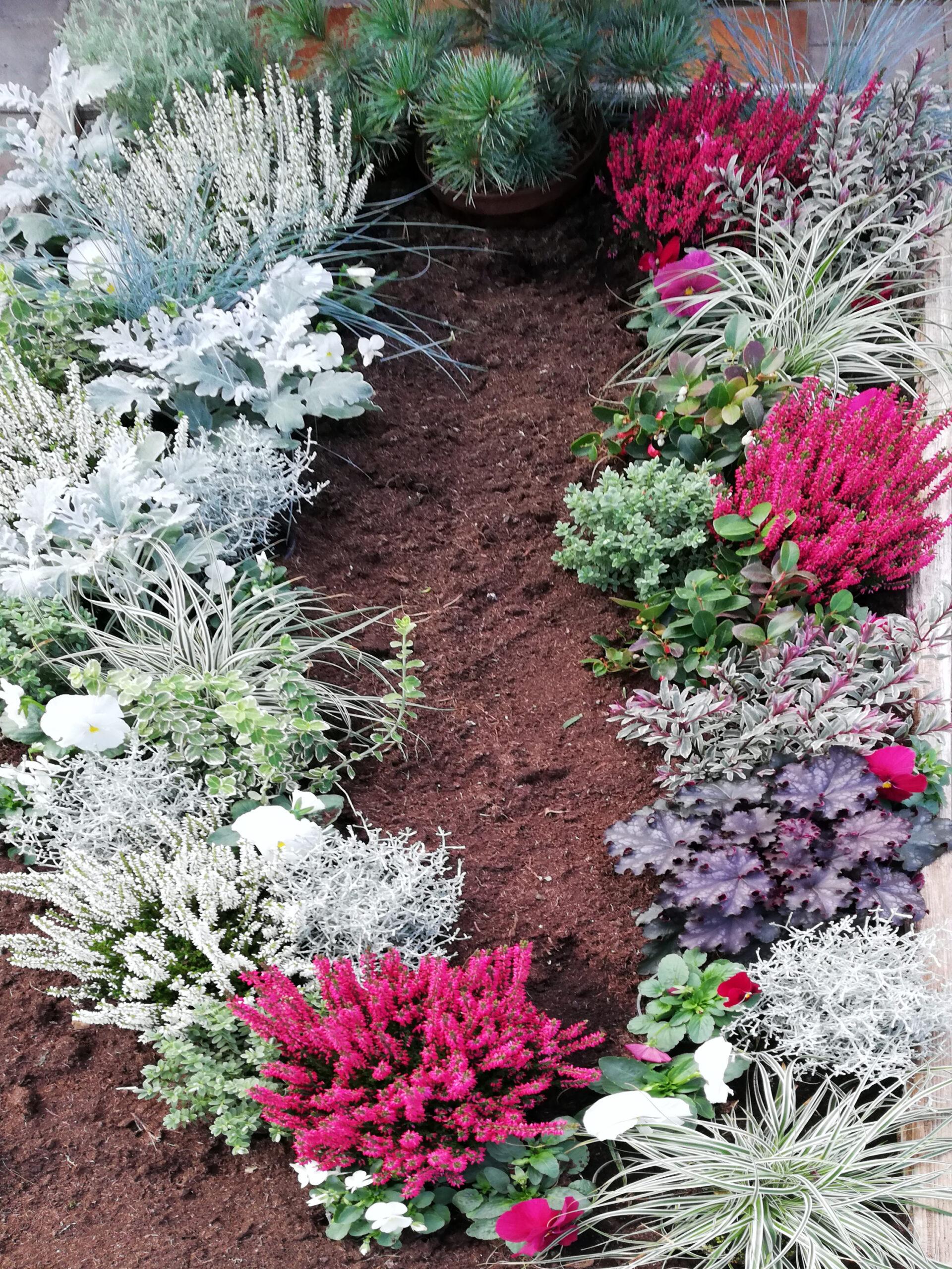Winter Grab Bepflanzung weiß Pink