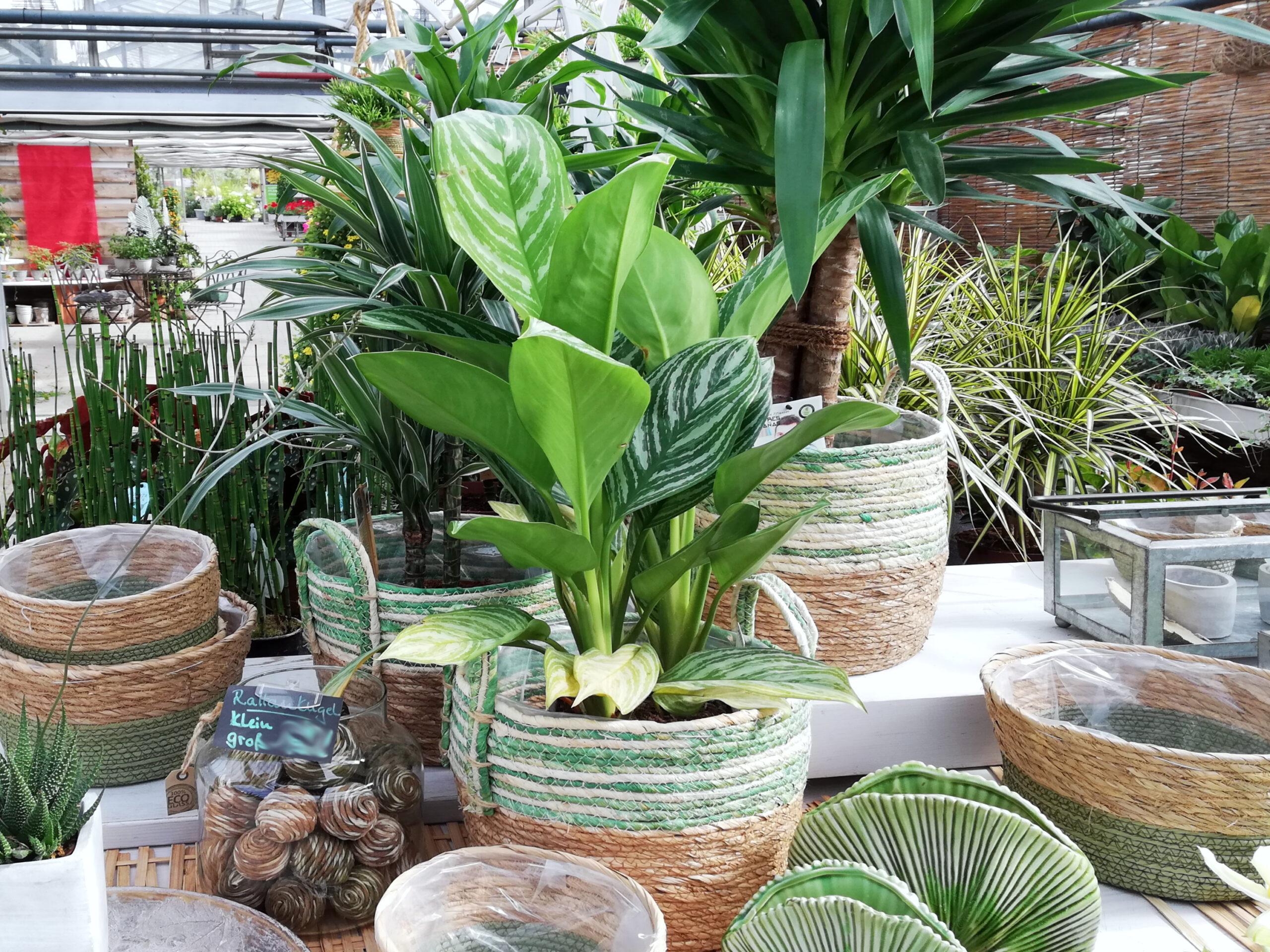 Zimmerpflanzen im Korb