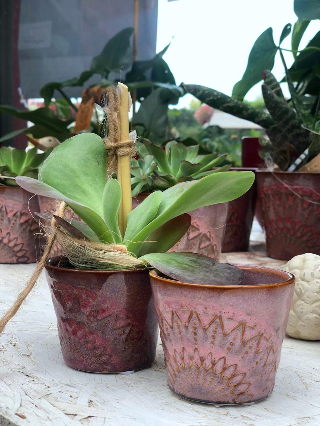 Zimmerpflanzen Schöne Übertöpfe